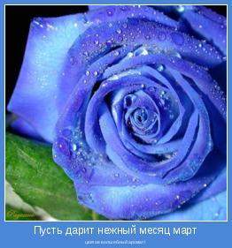 цветов волшебный аромат!