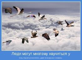 птиц. Научиться взлетать, даже если крылья сломаны.