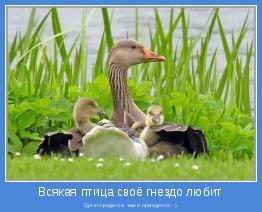 Где кто родится, там и пригодится ;-)