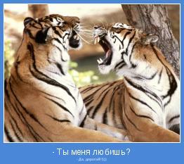 - Да, дорогой!!!)))