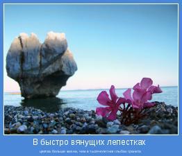 цветка больше жизни, чем в тысячелетних глыбах гранита