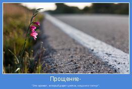 """""""Это аромат, который дарит цветок, когда его топчут""""."""