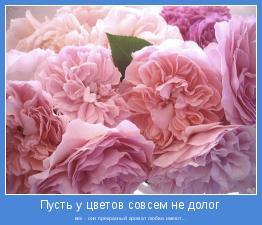 век - они прекрасный аромат любви имеют...