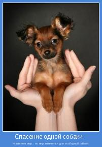 не изменит мир... но мир  изменится для этой одной собаки.