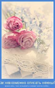 аромат розы, так и не выразить словами чувство любви...
