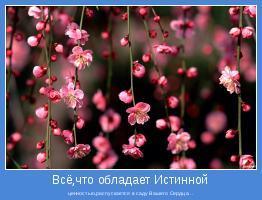 ценностью,распускается в саду Вашего Сердца...