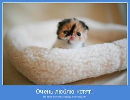 Не могу устоять перед котенками!)