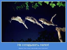 Махать! Они станут крыльями и мы полетим!!!