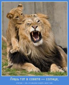 в битвах — лев, кто разумом смирять умеет гнев.