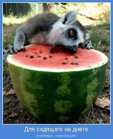 лучший фрукт - самый большой!