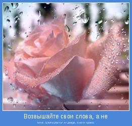 голос. Цветы растут от дождя, а не от грома.