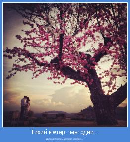 распустилось дерево любви...