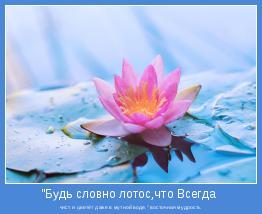 """чист и цветёт даже в мутной воде."""" восточная мудрость"""