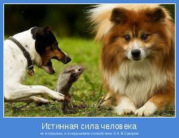 не в порывах, а в нерушимом спокойствии © А.В.Суворов