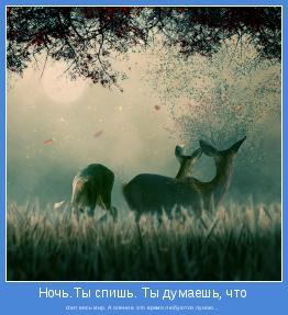 спит весь мир. А олени в это время любуются луною...