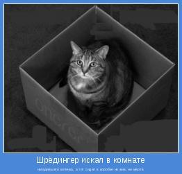 нагадившего котенка, а тот сидел в коробке ни жив, ни мертв