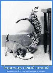 возникает дружба, то это не иначе, как союз против повара