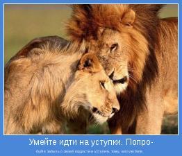 буйте забыть о своей гордости и уступить тому, кого любите.