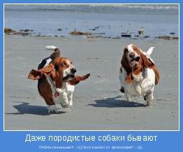 ОЧЕНЬ смешными!!! :-)))) Всё зависит от фотографа!!! :-))))