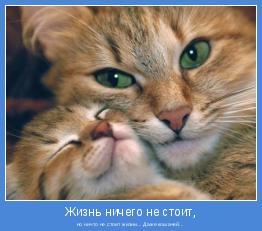 но ничто не стоит жизни... Даже кошачей...