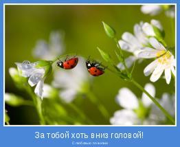 С любовью по жизни