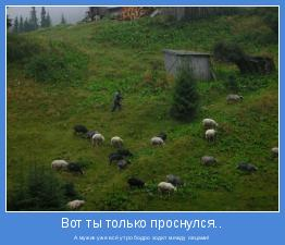 А мужик уже всё утро бодро ходит между овцами!