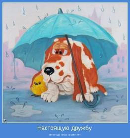 непогода лишь укрепляет