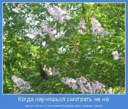цветы и листья, а на промежетки между ними, увидишь нужное