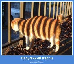 даже кошки боится...