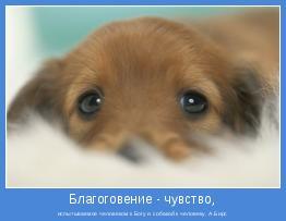 испытываемое человеком к Богу и собакой к человеку. А.Бирс