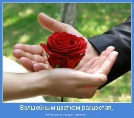 любовь пусть сердца согревает...