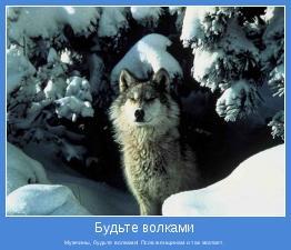 Мужчины, будьте волками! Псов женщинам и так хватает.