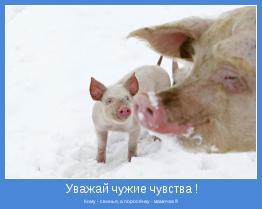 Кому - свинья, а поросёнку - мамочка !!!