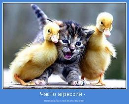 агрессией - это просьба о любви и внимании