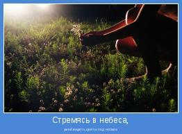 умей видеть цветы под ногами