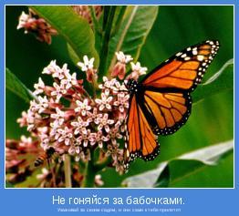 Ухаживай за своим садом, и они сами к тебе прилетят