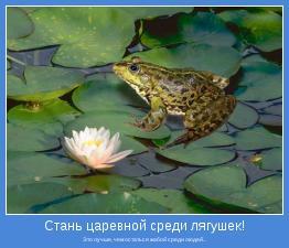 Это лучше, чем остаться жабой среди людей...