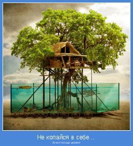 Лучше посади дерево!