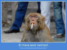 Это ты на свои мотиваторы обезьян пихал ?