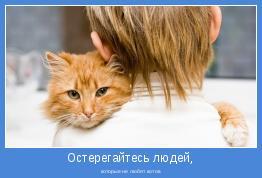 которые не любят котов