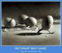 вылупиться и из кукушкиного яйца.