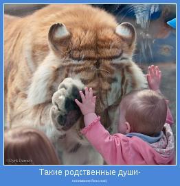 понимание без слов)