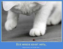 хорошо жить, не лучше всех...