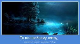даже ночью плавают прекрасные лебеди