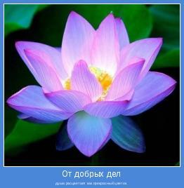 душа расцветает как прекрасный цветок.