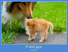 Ты мой друг...