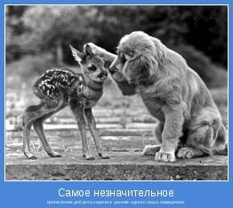 проявление доброты намного ценнее одного лишь намерения.