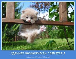 трудностях. © Альберт Эйнштейн