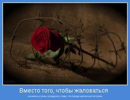 на шипы у розы, я радуюсь тому, что среди шипов растет роза