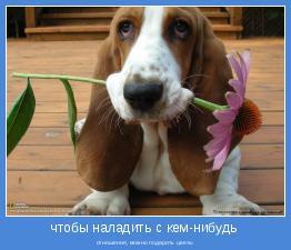 отношения, можно подарить цветы